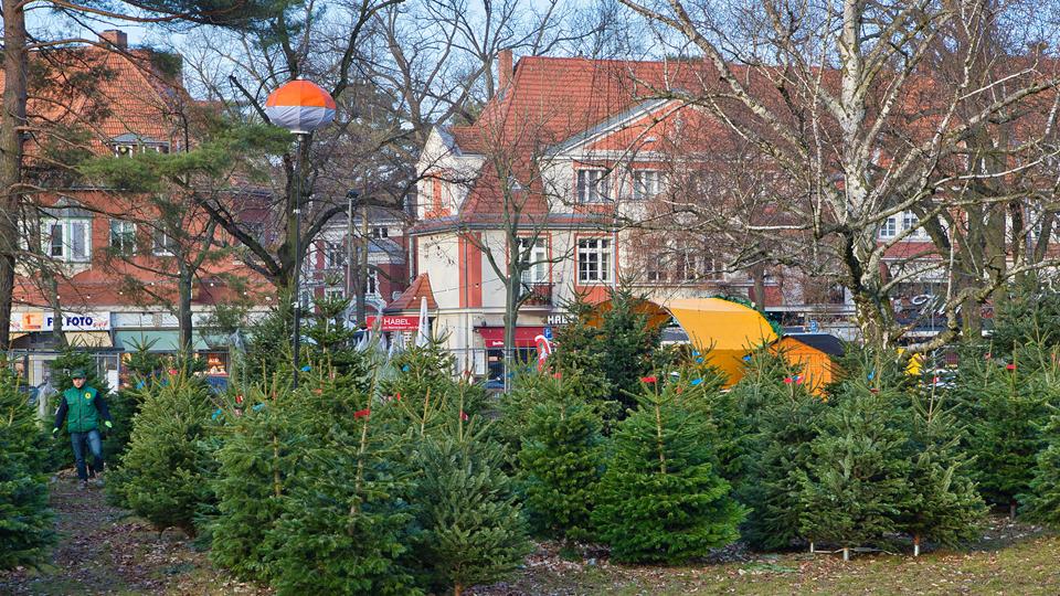 Unsere Weihnachtsbäume in Ihrer Nähe